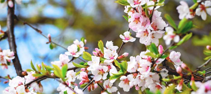 Spring is a wonderful time to enjoy shopping, dining, and the wonderful sights in Souderton, Montgomery County PA